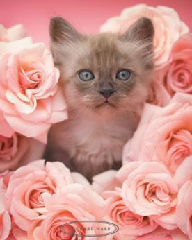Joli Chat dans les Roses