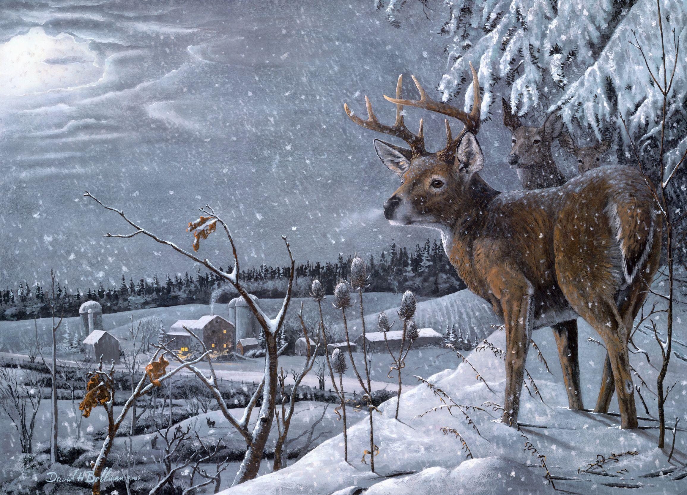 Résultat d'images pour Gifs Rouge gorge neige